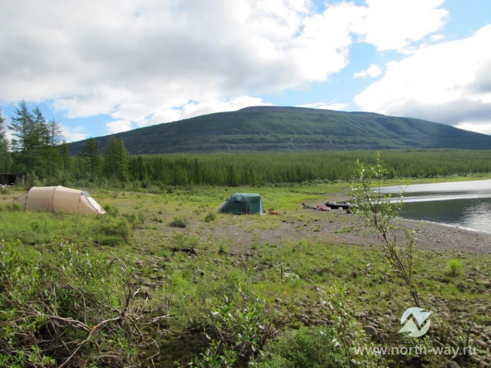 организованной восточно-сибирской нефтегазовой компанией, эвенкийский олень